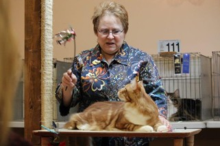 Photo from the 2012 cat show